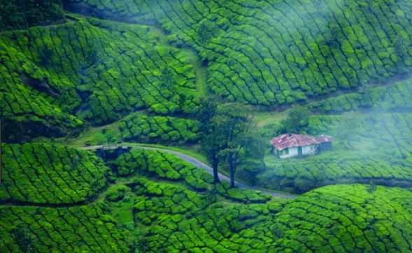 Cochin-Athirapally-Munnar Tour Package
